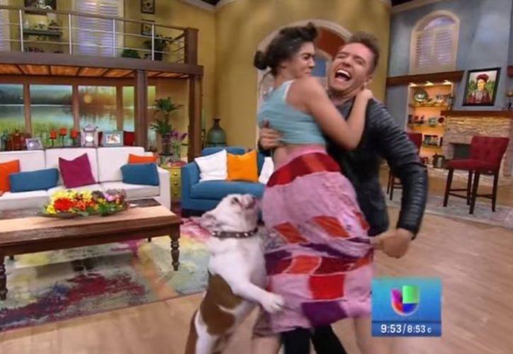 Perro muerde a famosa presentadora en vivo (video)