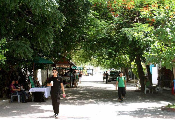Un zapote, dos ceibas y un álamo, entre los árboles que formarán parte del museo; el plan es que sean 22. (Adrián Barreto/SIPSE)