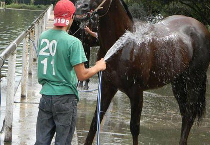 El adolescente era empleado de las víctimas, quienes se dedicaban a la renta de caballos en el municipio de Zapotlanejo, Jalisco. La imagen se utiliza únicamente como referencia. (1cruzdelsur.com)