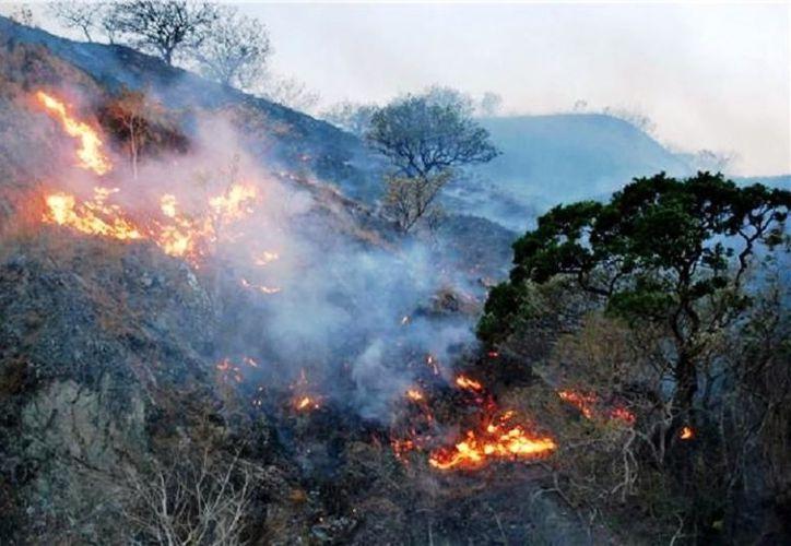 La superficie afectada en todo el territorio oaxaqueño es de 19 mil 273 hectáreas. (TVBUS).