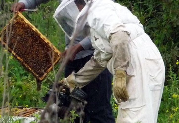 Fomentarán el consumo de la miel y sus beneficios. (Foto: Milenio Novedades)