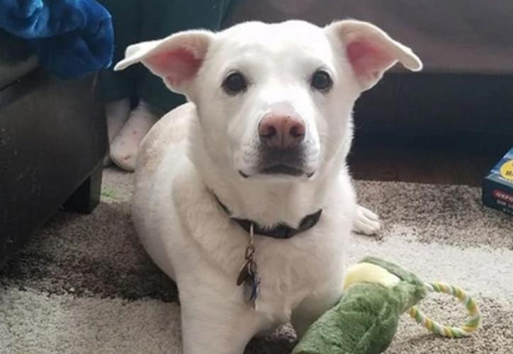 El perro recibió la eutanasia que le tocaba a otro, lo que destrozó el corazón de sus amos. (Infobae)
