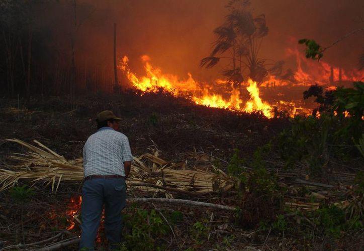 Al parecer los cazadores prendieron fuego para obtener a sus presas, pero las llamas se salieron de control. (Edgardo Rodríguez/SIPSE)