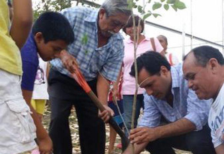 El diputado Mauricio Vila ayudó a los vecinos a reforestar el parque del fraccionamiento Manzana 115. (Cortesía)