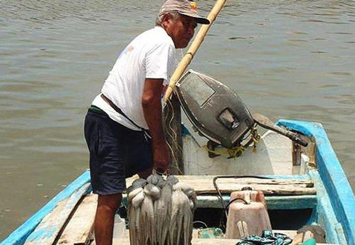 Al finalizar la temporada del pulpo vienen días complicados para los hombres de mar. Imagen de contexto de un pescador al llegar a la costa. (Milenio Novedades)