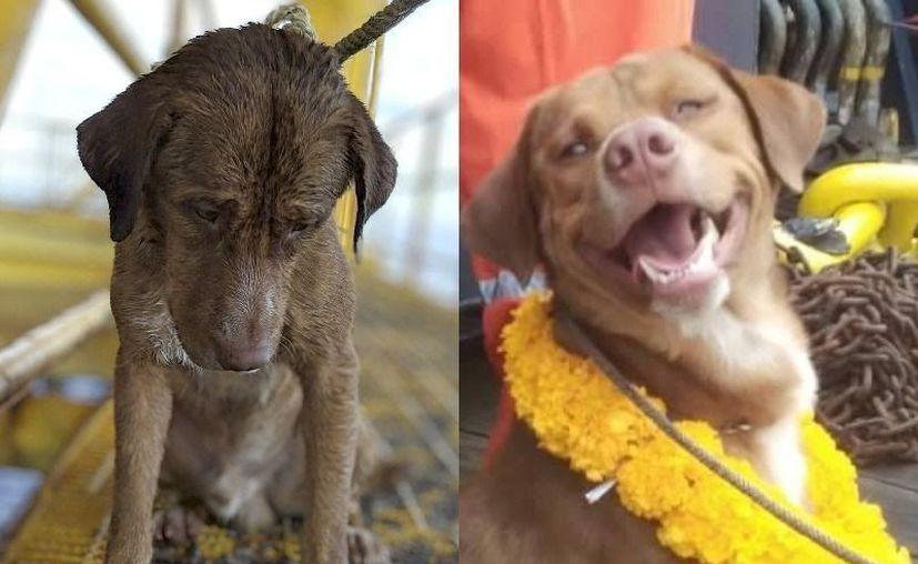 """El perrito fue llamado """"Boon Rod"""", o """"sobreviviente"""". (Internet)"""