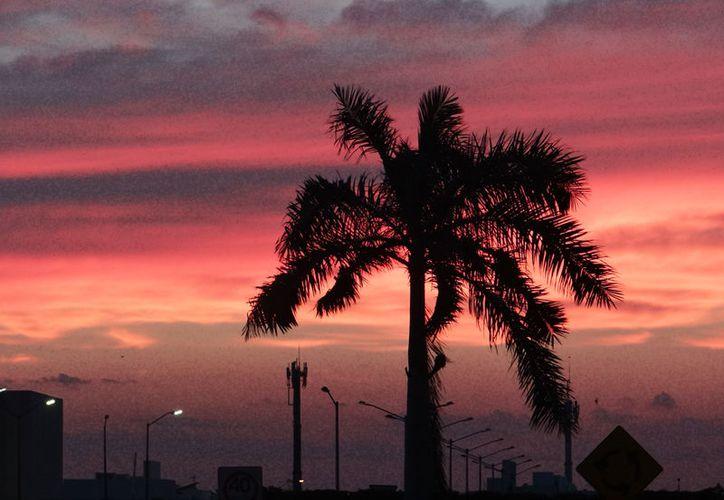 En el norte de Mérida, cada vez hay menos árboles en el horizonte. Según el Gobierno, es la zona más deforestada de la Ciudad. (Archivo/SIPSE)