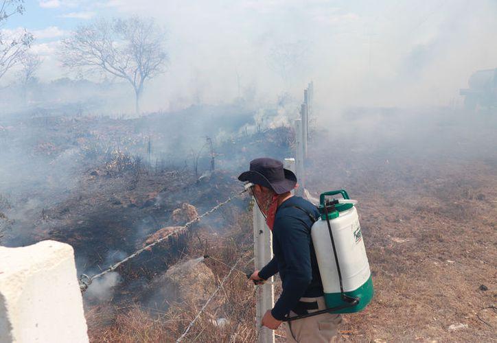 Además de los daños a la vegetación, los incendios ponen en riesgo a todos quienes estén cerca. (Novedades Yucatán)