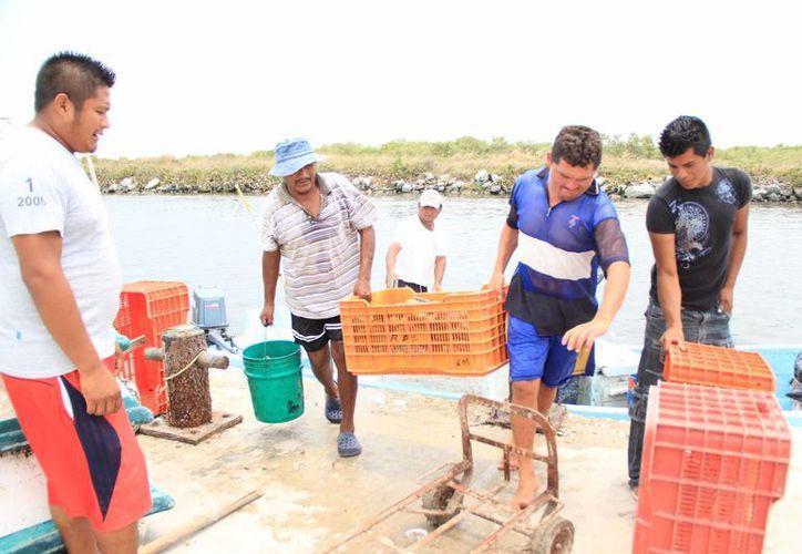Los pescadores yucatecos se quejan de la pesca ilegal cometida por otros 'compañeros'. (Foto de contexto de SIPSE)