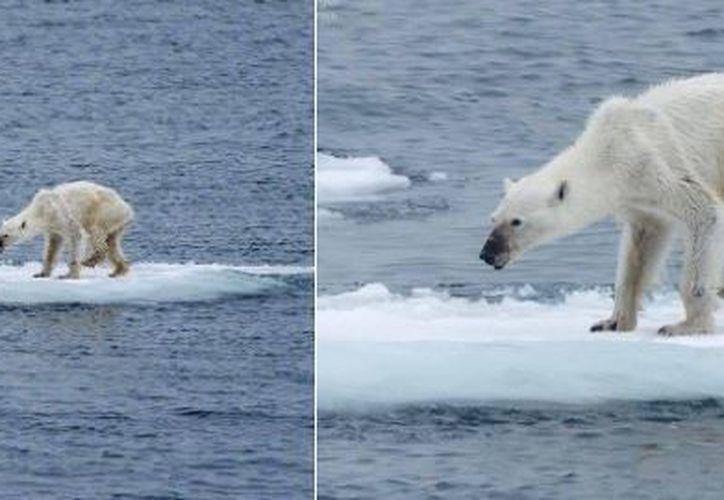 Las autoridades locales advirtieron que las medidas tomadas contra los osos han resultado ineficaces. (Twitter)