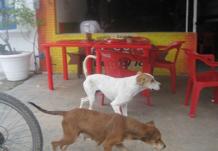 Los animales se pasean por el mercado; los ciudadanos temen que ocasionen enfermedades. (Foto: Juan Rodríguez)