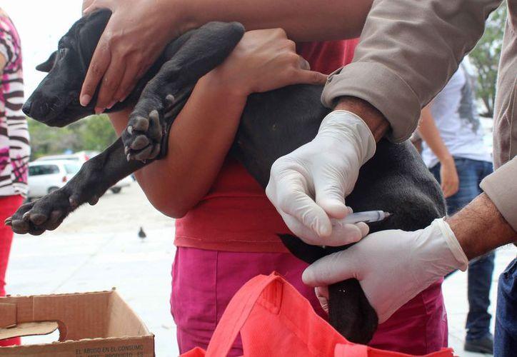 Entregan perros en adopción en buenas condiciones de salud. (Ivette Ycos/SIPSE)