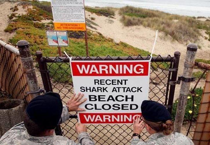 En Texas sólo se han registrado 35 ataques de tiburones, 2 de ellos mortales, desde 1911. (Agencias)