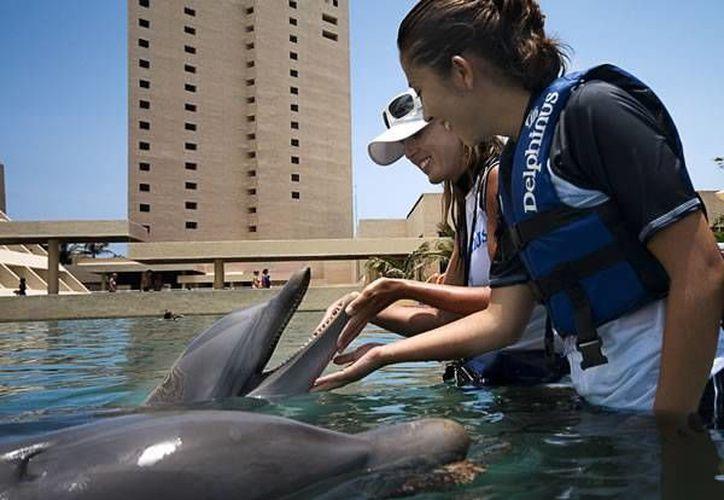 La muestra fotográfica será sobre la los delfines que habitan en Delphinus. (Redacción/SIPSE)