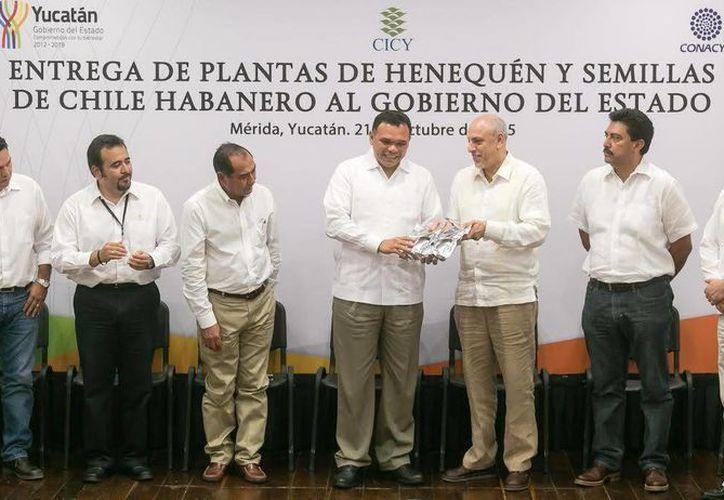 El gobernador Rolando Zapata Bello recibió este miércoles plantas de henequén obtenidas in vitro y chile habanero del CICY. (SIPSE)