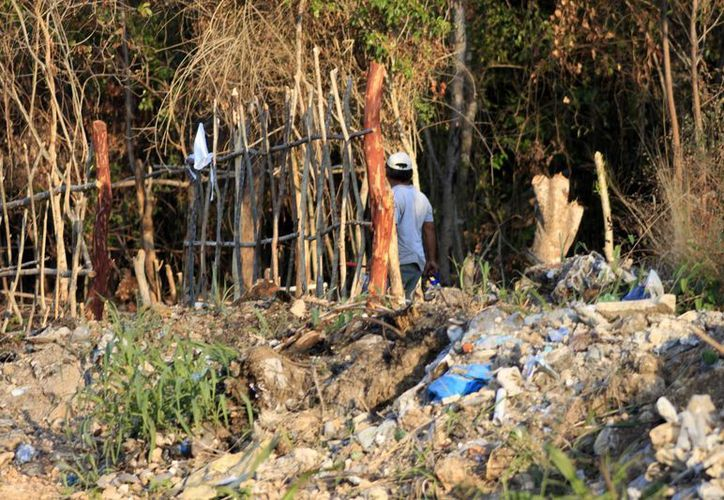 Se informó que las denuncias por deforestación contra asentamientos, son improcedentes ya que no se trata de áreas forestales. (Harold Alcocer/SIPSE)