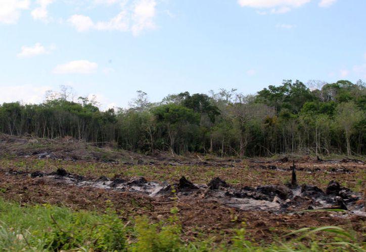Hijo de un ejidatario, denunció públicamente que pretenden despojar a su madre y a otra mujeres de la tercera edad, de más de 40 hectáreas de tierras. (Carlos Castillo/SIPSE)