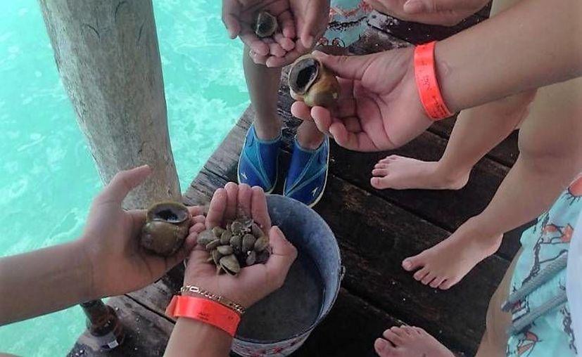 Buscan la fundamentación legal para presentar una iniciativa de ley que evite la extracción del molusco en la laguna. (Javier Ortiz/SIPSE)