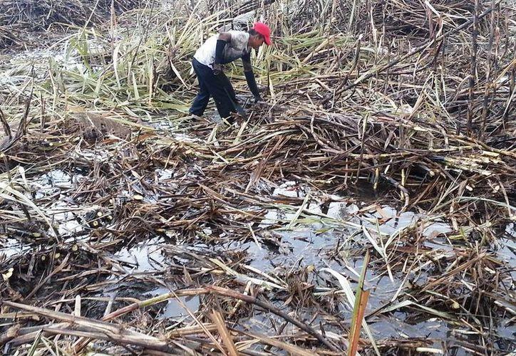 Los escurrimientos causaron daños severos en los cultivos. (Javier Ortiz/SIPSE)