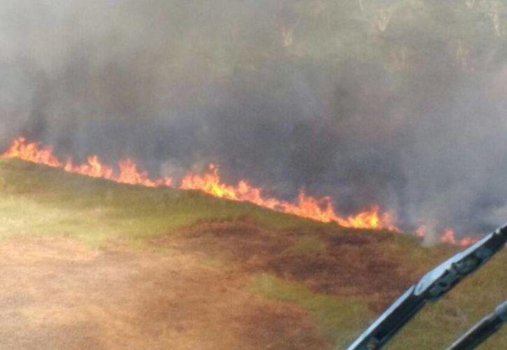 Se pensó que el gran incendio en la reserva de Dzilam de Bravo había sido extinguido, pero no es así. Las labores continuarán este jueves. (Fotos: SIPSE)