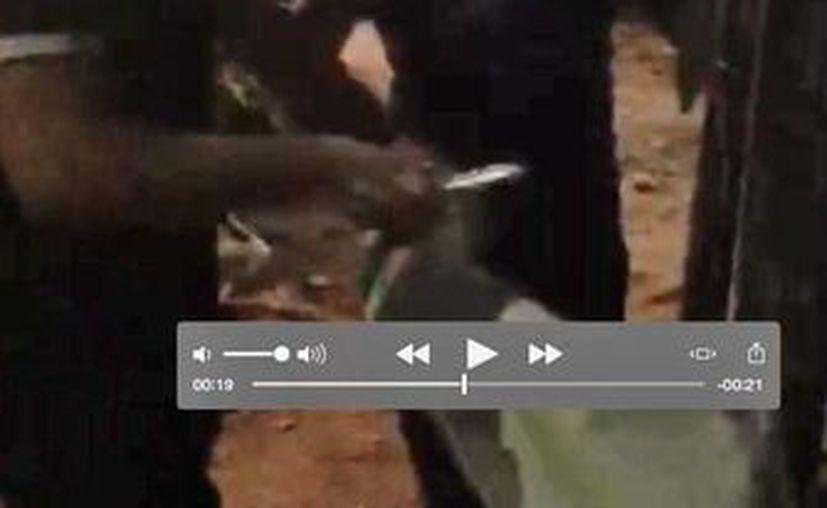 El senador Féliz González Canto aparece en un video, que circuló en redes sociales, violando la ley electoral. (Cortesía)