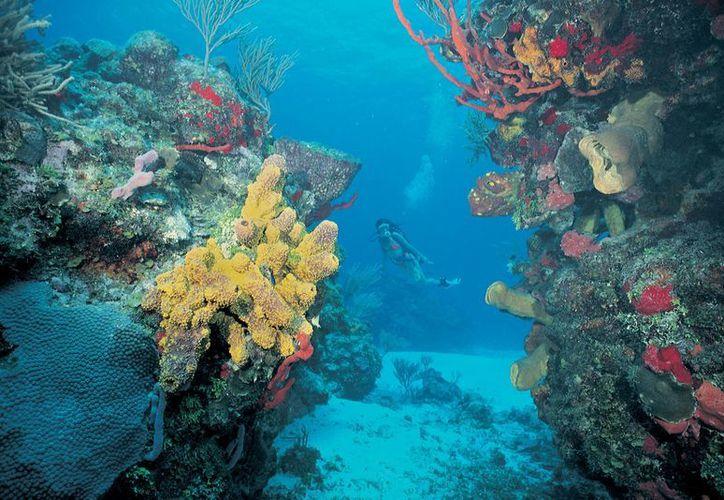 El tema de las aguas residuales debe ser prioridad para el gobierno de la República, pues de lo contrario los arrecifes de coral correrán un serio peligro. (Redacción/SIPSE)