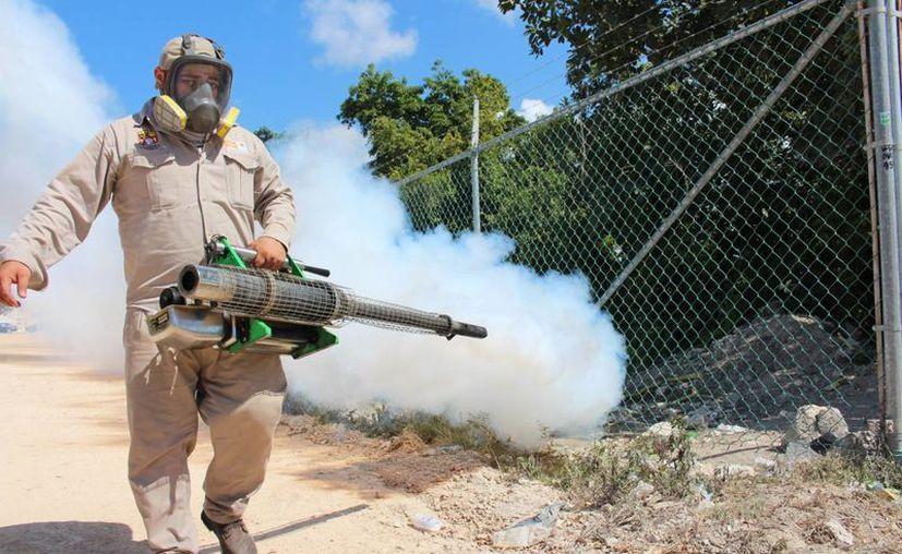 La Secretaría de Salud realiza labores para disminuir la presencia del mosquito transmisor del chikungunya. (Adrián Barreto/SIPSE)