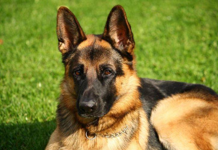 Ascienden a sargento a un oficial que mató a tiros a un perro sin justificación. (Internet)