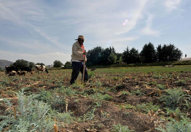 Peña Nieto asegura que el Gobierno de la República no ha dejado de destinar recursos a la actividad agropecuaria. (Archivo/Notimex)