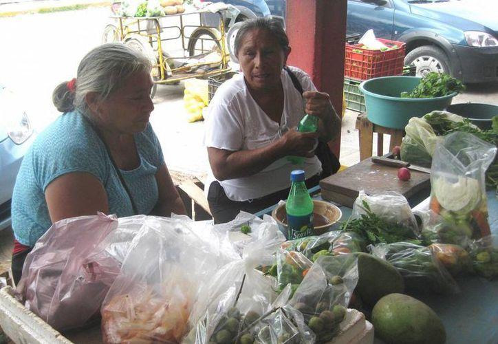 La mayoría de los productores no consiguieron los químicos para prevenirse de esta plaga, por lo que perdieron la totalidad de sus cultivos. (Javier Ortíz/SIPSE)