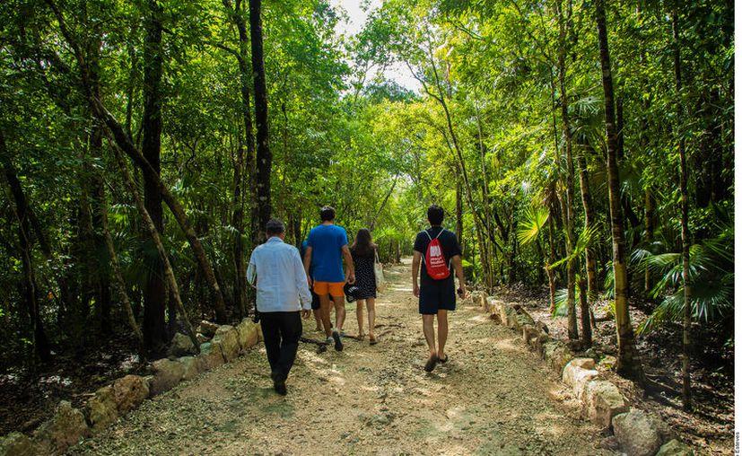 La desarrolladora podrá hacer el cambio de uso de suelo de áreas forestales en 9.9 hectáreas, lo cual implica el desmonte de selva baja y media. (Foto: Archivo Reforma).