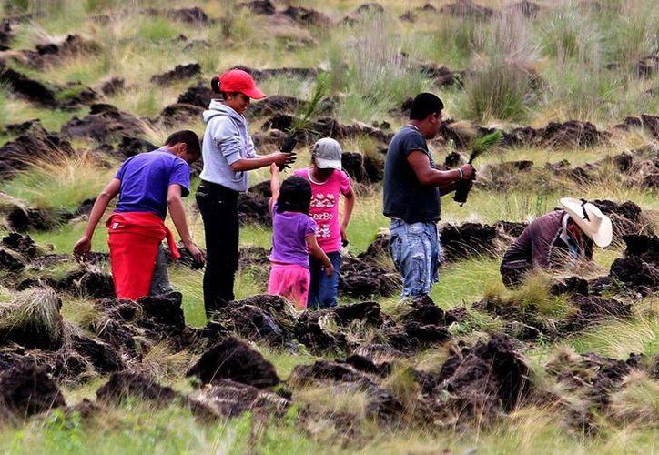 Las familias de migrantes ya podrán tener certeza jurídica ante el ejido. (Notimex)