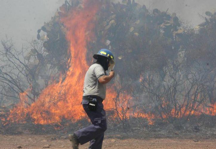 El uso de suelo y los huracanes generan que el riesgo de los incendios forestales aumente. (Notimex)