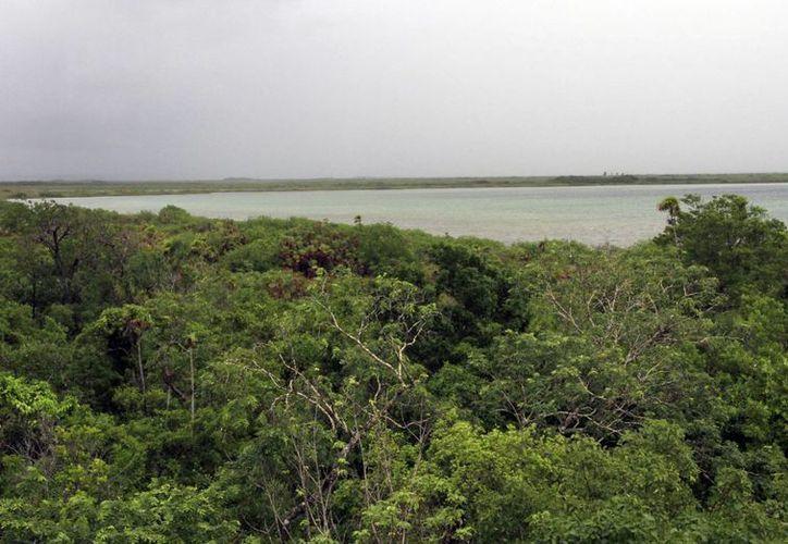 La Reserva de la Biósfera del Caribe abarcaría 5.6 millones de hectáreas de aceptarse la propuesta. (Luis Soto/SIPSE)