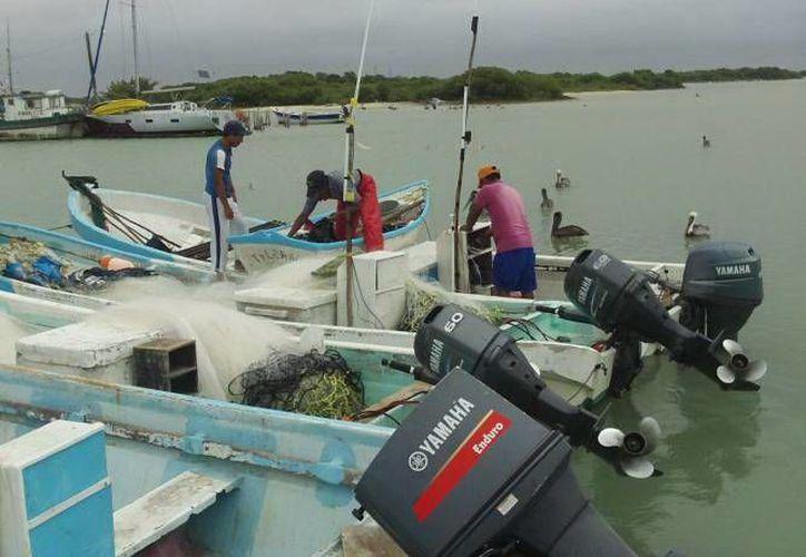 La exploración del litoral de la península ayudará a conocer el estado de las especies marinas. (SIPSE.com)