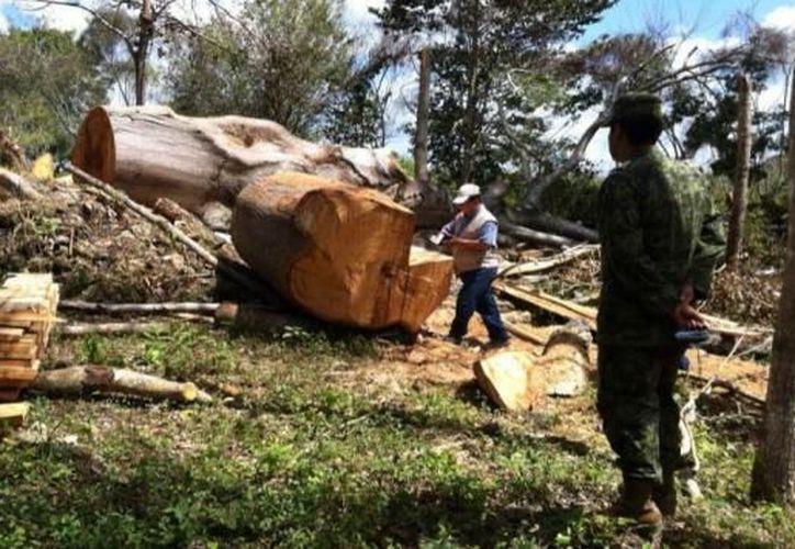 El promedio anual de superficie forestal arbolada en el país disminuyó 51 por ciento. (Contexto)