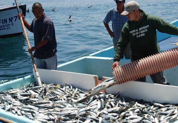 En el foro, además de conferencias, simposios sobre temas estratégicos para el país, se presentarán resultados de investigaciones las actividades pesqueras y acuícolas. (sagarpa.gob.mx)