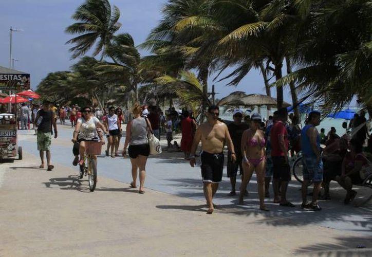 En el Caribe mexicano las proporciones de macroalgas son extremadamente altas. (Archivo/ SIPSE)