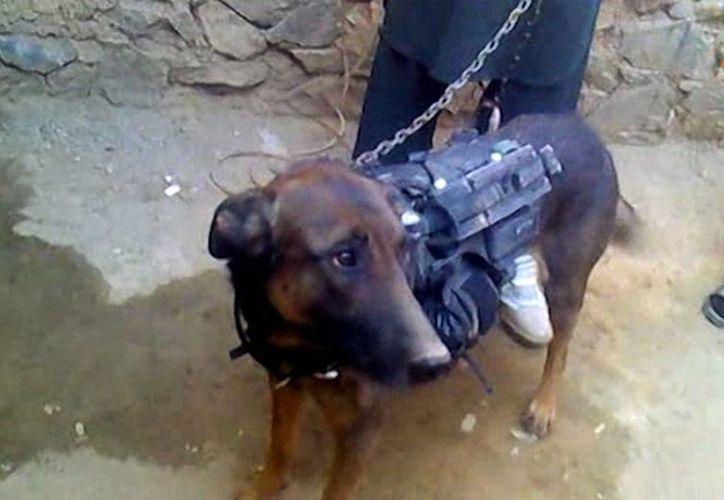 Foto donde se ve a un perro que al perecer pertenece a personal de la alianza militar OTAN y lleva puesto un arnés de alta tecnología. (Agencias)