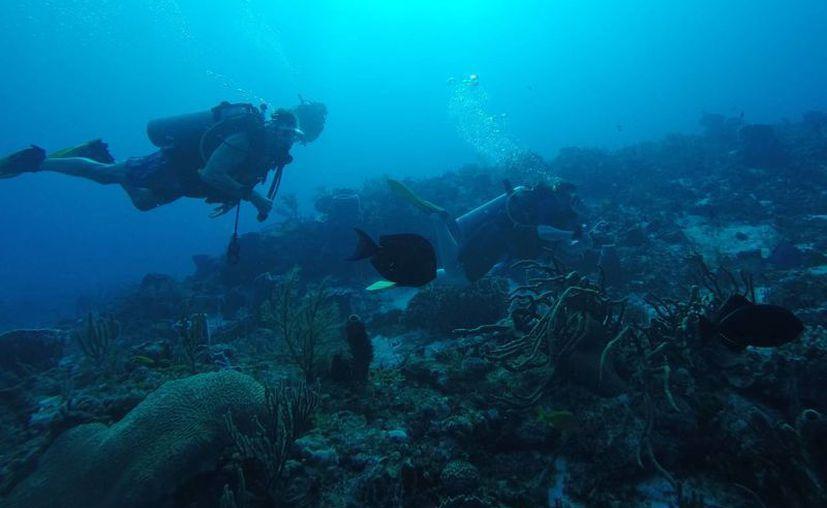 La riqueza del fondo marino que se encuentra en territorio quintanarroense favorece a la economía azul. (Luis Soto/SIPSE)