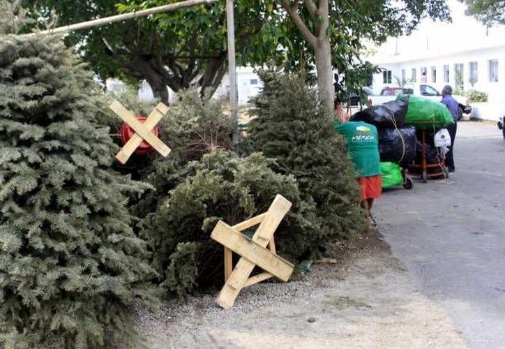 La basura ha vuelto a ser uno de los problemas más importantes de Mérida. (SIPSE/Foto de archivo)