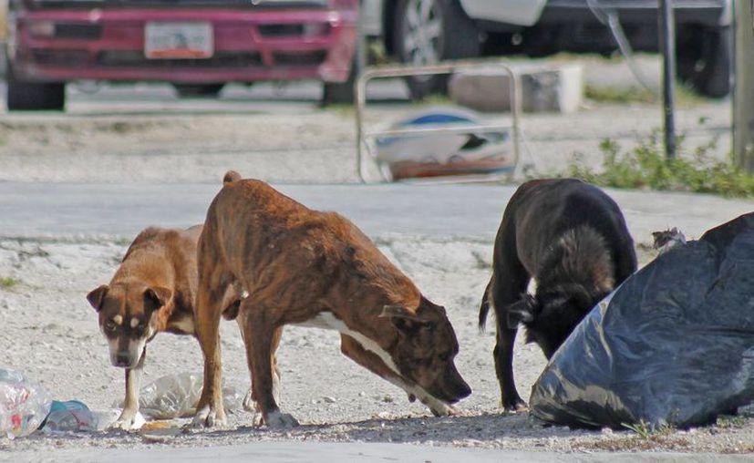 En los dos últimos años sólo se han registrado 12 denuncias por maltrato a la fauna. (Jesús Tijerina/SIPSE)