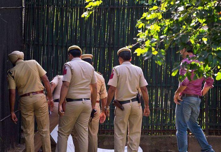 Un tigre blanco mató a un hombre en un zoológico de la India. Los cuidadores lograron 'asustar' al felino, pero cuando llegaron a la víctima ya era demasiado tarde. (AP)