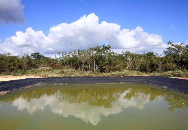 Sólo 44 municipios de los 106 de Yucatán cuentan con adecuado un esquema de relleno sanitario. (Milenio Novedades)
