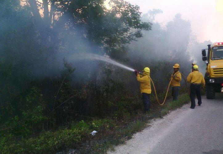 """La """"etapa crítica"""" de incendios forestales abarca los meses de marzo, abril y parte de mayo. (Edgardo Rodríguez/SIPSE)"""