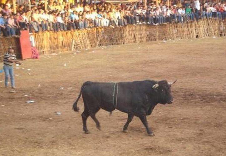 La Ley de Protección a la Fauna establece con claridad que el maltrato a los animales está prohibido en todos los eventos y actividades que se realicen en Yucatán. (Milenio Novedades)