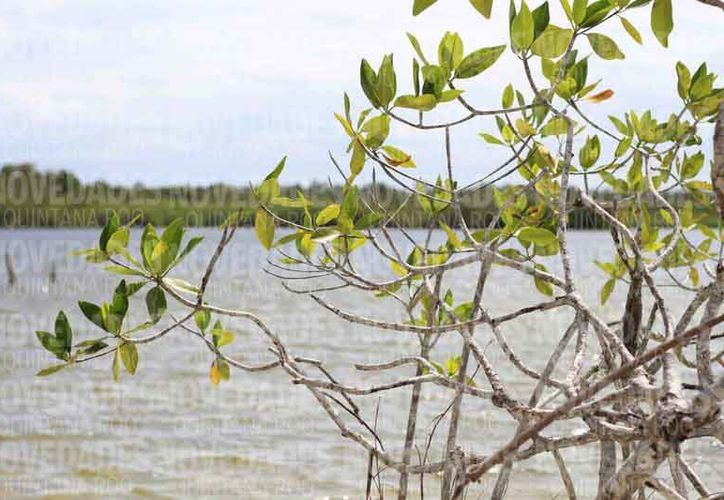 El Sistema Lagunar Chacmochuch conserva gran relevancia ecológica. (Jazmín Ramos/SIPSE)