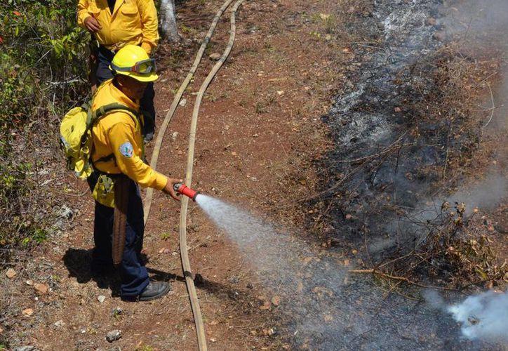 Los brigadistas se ocupan de los tres incendios en Quintana Roo. (Cotesía/Conafor)