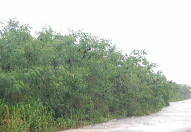 Cozumel fue elegido para esta acción, ya que el 50% del terreno de la isla, son Áreas Naturales Protegidas. (Tomás Álvarez/SIPSE)