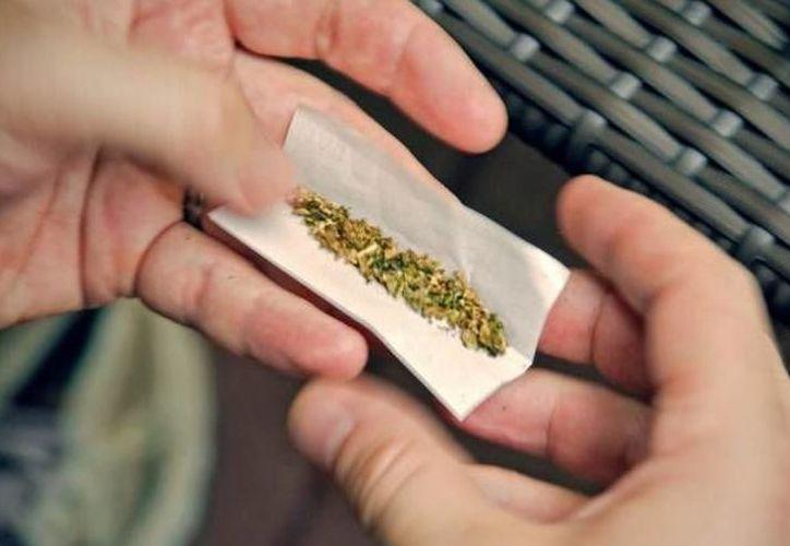 Hace unos días el colectivo Dzac Yah entregó a la Cofepris la primera solicitud en el Estado para que se permita el cultivo y consumo personal de marihuana con fines lúdicos, recreativos y medicinales.  (Foto:  Archivo)